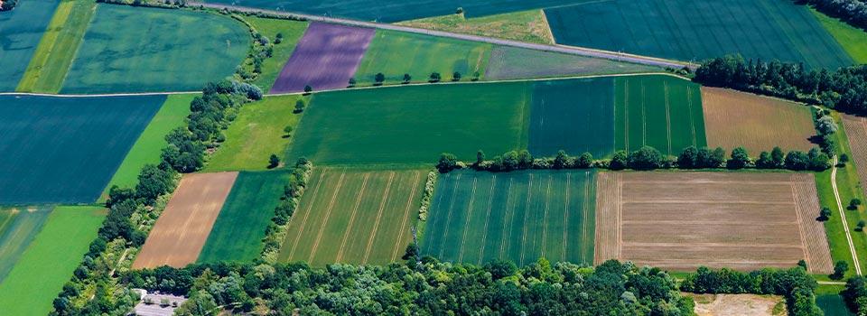Die Entwicklung in der Landwirtschaft